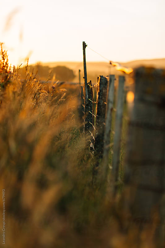 A close-up of a fence at sunset by Leandro Crespi for Stocksy United