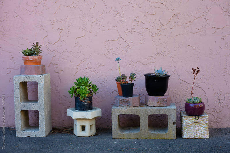 Simple decoration of succulents on breeze blocks  by Carolyn Lagattuta for Stocksy United