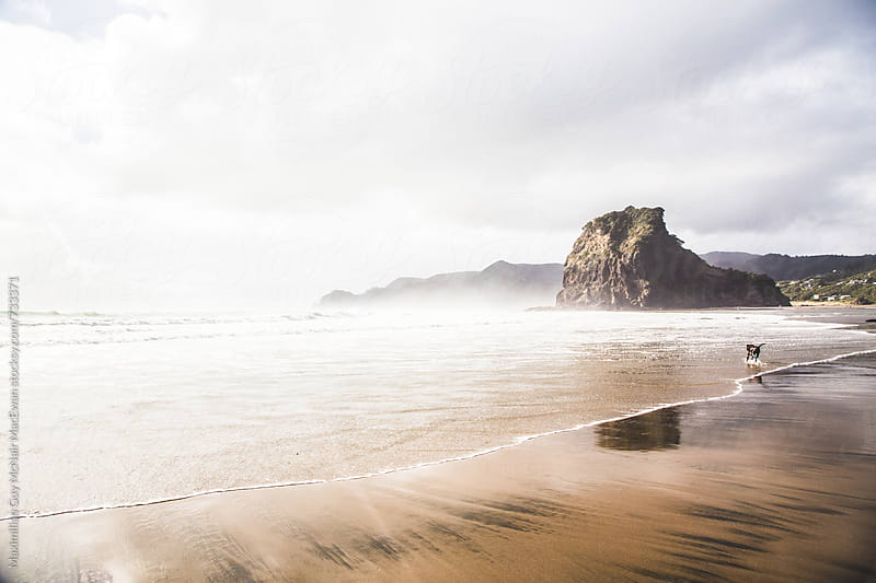 Afternoon at Piha beach by Maximilian Guy McNair MacEwan for Stocksy United