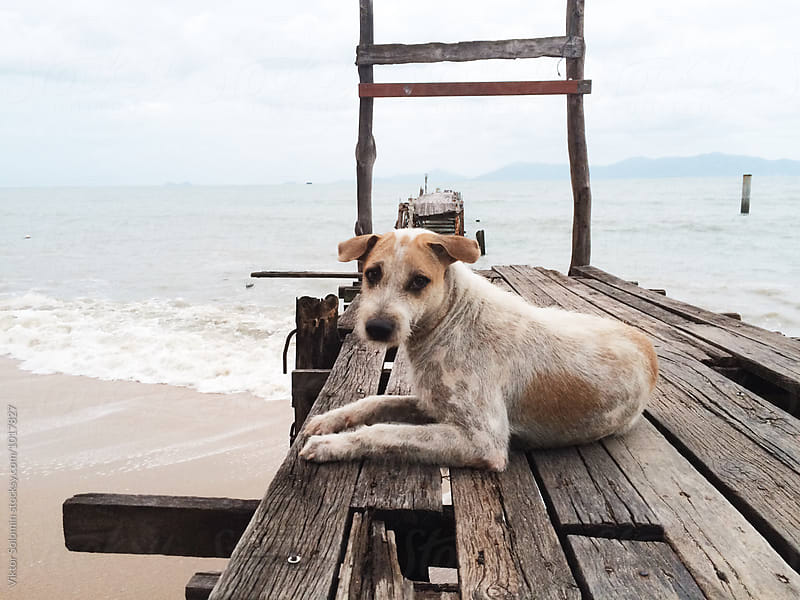 Old lonely sad dog on the pier by Viktor Solomin for Stocksy United