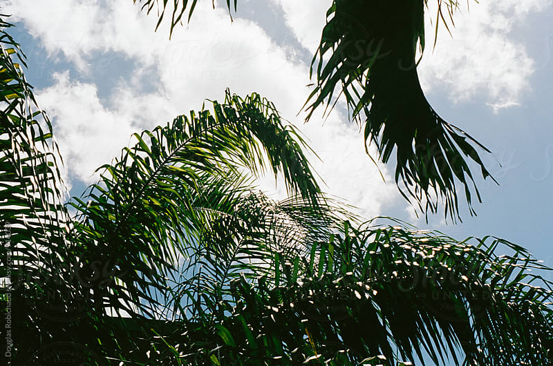Palm trees swaying in the sky by Douglas Robichaud for Stocksy United