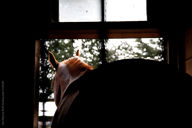 Red Horse in Stall Silhouette by Sari Wynne Ruff for Stocksy United