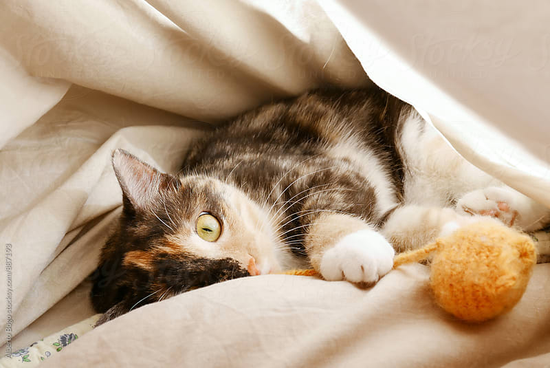 Pet cat lying under blanket with orange toy mouse by Alberto Bogo for Stocksy United