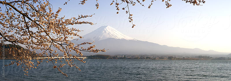 Cherry Blossom and Mount Fuji by Jason Denning for Stocksy United