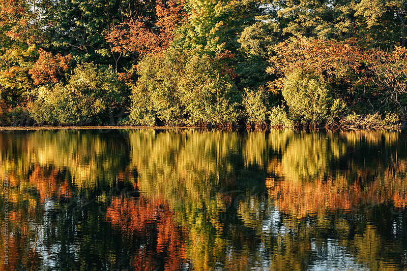 autumn colored leaves on trees mirrored in pond by Deirdre Malfatto for Stocksy United