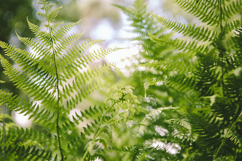 A jumble of fern fronds. by Helen Rushbrook for Stocksy United