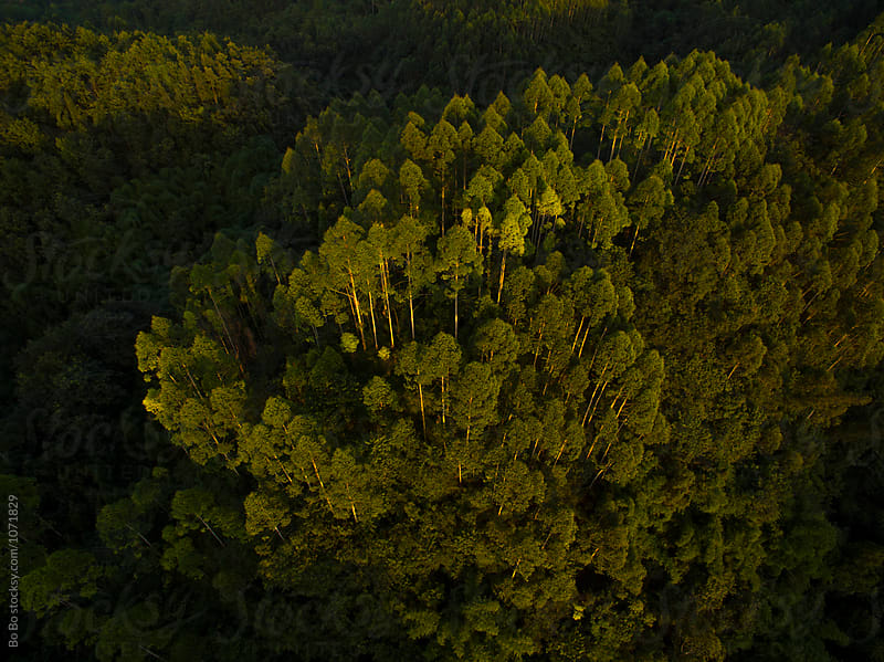 aerial view of woods at sunset by Bo Bo for Stocksy United