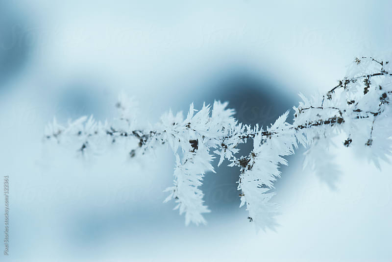 Frosted branches in winter by Pixel Stories for Stocksy United
