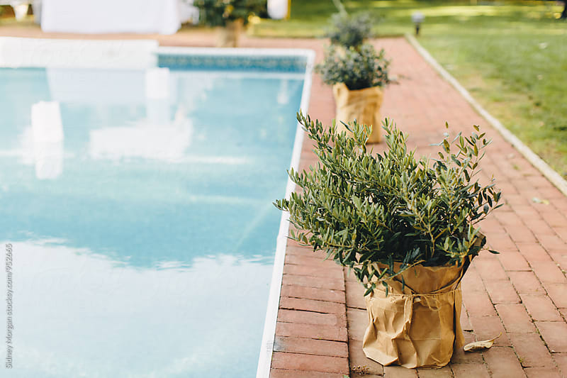 Plant by Pool by Sidney Morgan for Stocksy United