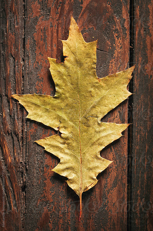 Autumn leaf on a wooden background by Aleksandar Novoselski for Stocksy United