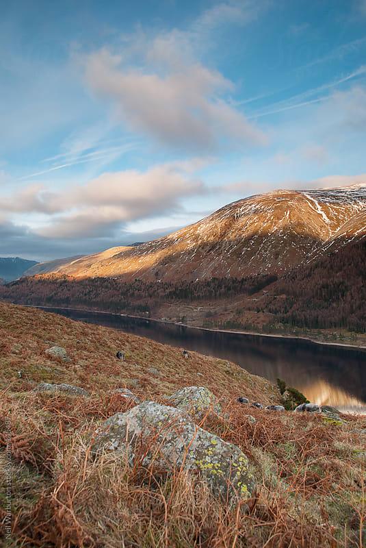 Winter Landscape by Neil Warburton for Stocksy United