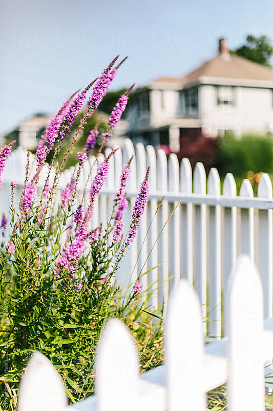 White Picket Fence Neighborhood by Raymond Forbes LLC for Stocksy United