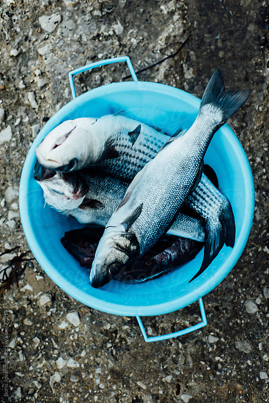 Fresh blue seafish for meal by Boris Jovanovic for Stocksy United