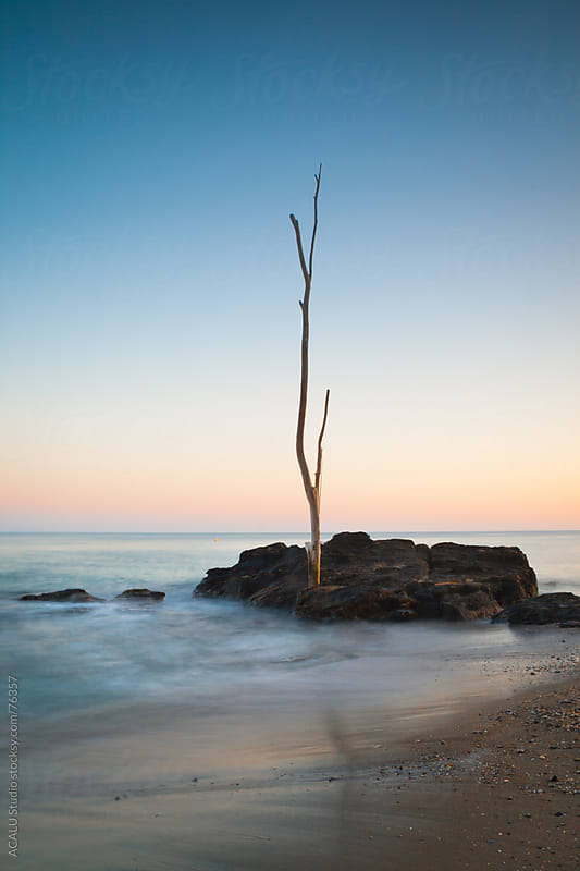 Trunk dry on a rock on the beach by ACALU Studio for Stocksy United
