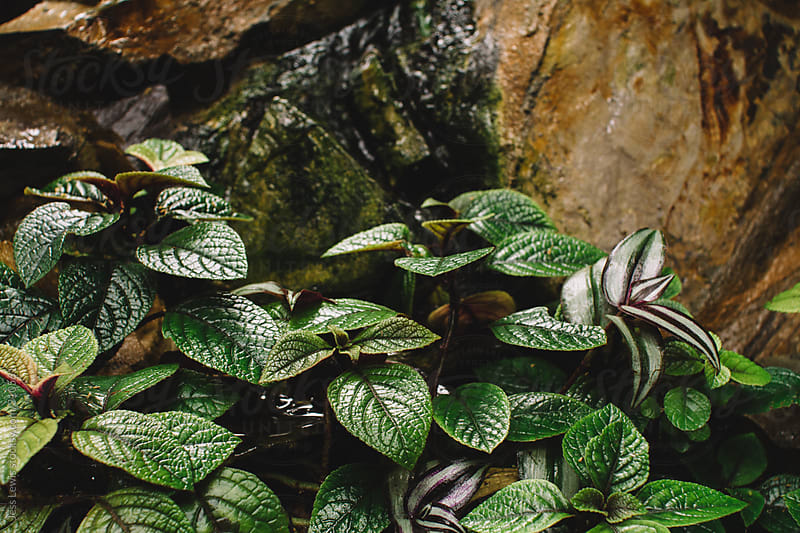 outdoor plant after a rain by Jess Lewis for Stocksy United
