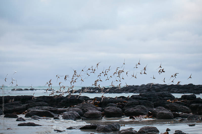 Sea birds flying over a wintery beach by Rowena Naylor for Stocksy United
