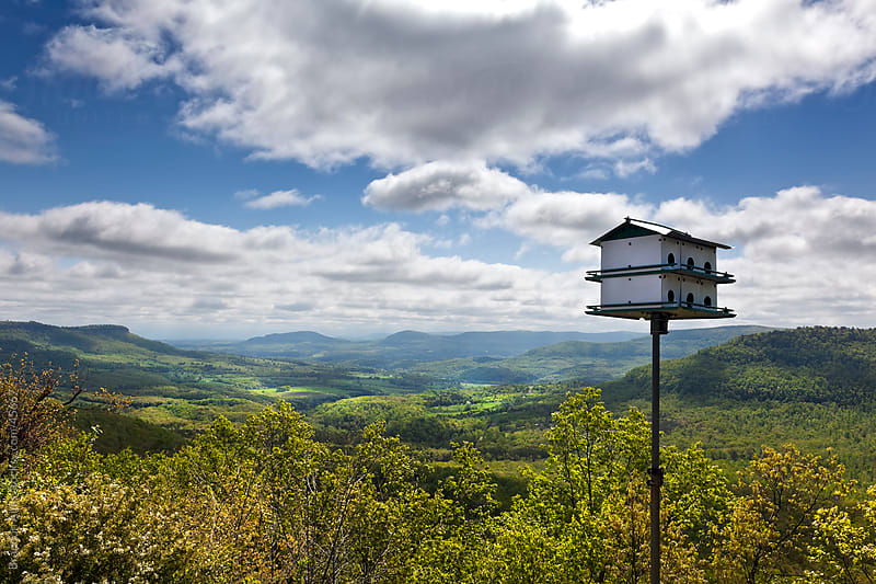 Birdhouse Overlooking the Buffalo River Canyon in Arkansas by Brandon Alms for Stocksy United