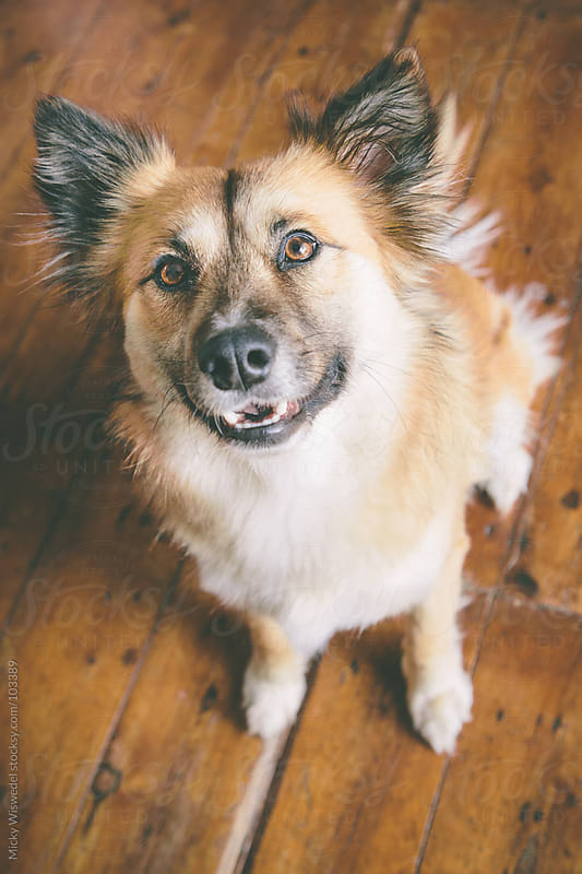 Portrait of a cute dog looking up at camera by Micky Wiswedel for Stocksy United