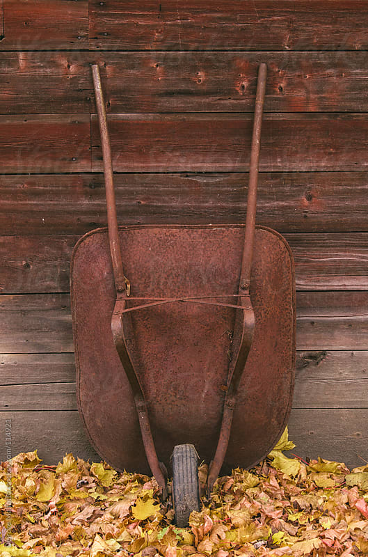 Rusty wheelbarrow by an old barn with autumn leaves by Deirdre Malfatto for Stocksy United
