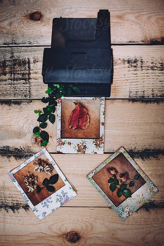 flower photoframes by Thais Ramos Varela for Stocksy United
