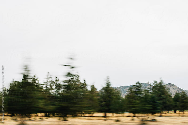 Blurry landscape of trees by Isaiah & Taylor Photography for Stocksy United