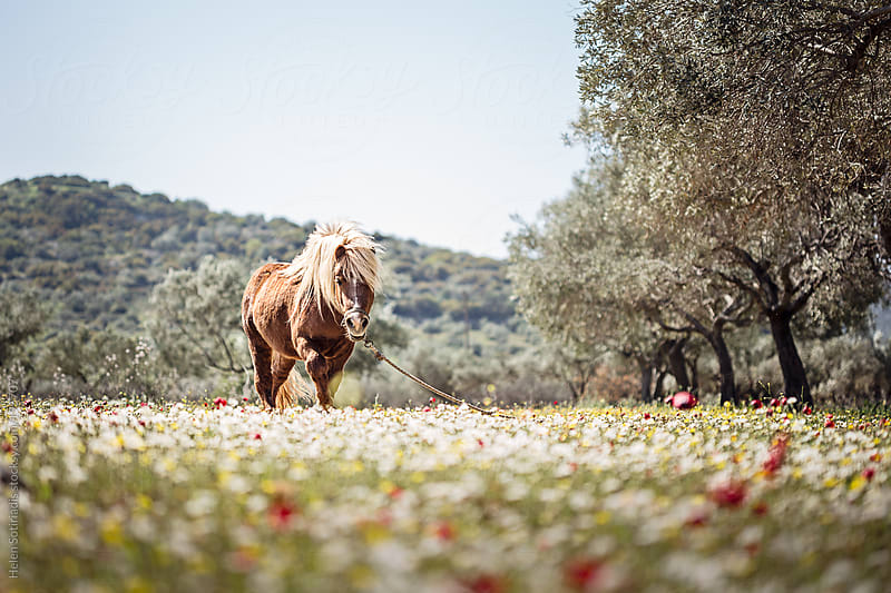 A Pony in the Spring Sun by Helen Sotiriadis for Stocksy United