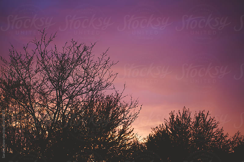 Pink and purple sky at sunset over top trees. by Sarah Lalone for Stocksy United