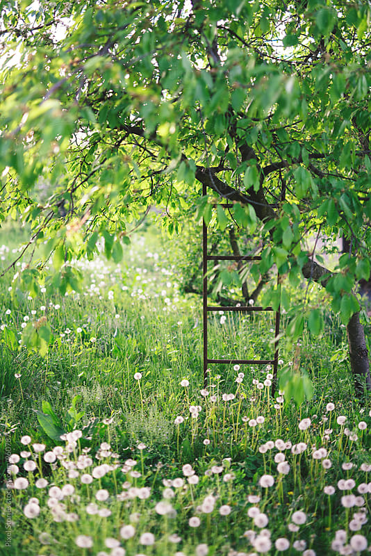 Ladder on tree in overgrown garden by Pixel Stories for Stocksy United