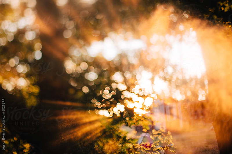Freelensed Sun Rays by Jessica Byrum for Stocksy United