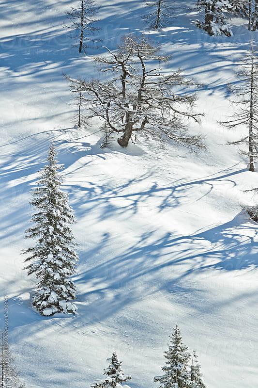 snowcovered winter landscape by Leander Nardin for Stocksy United