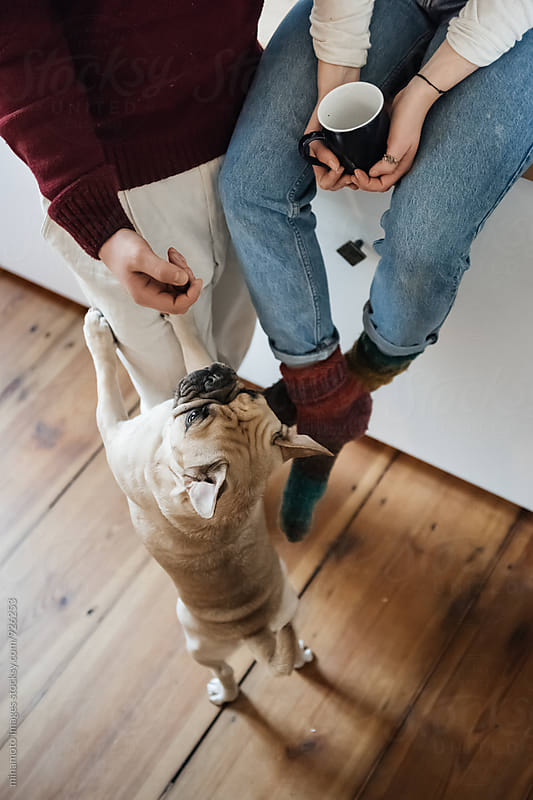 Small dog asking a coung couple for a treat. by minamoto images for Stocksy United
