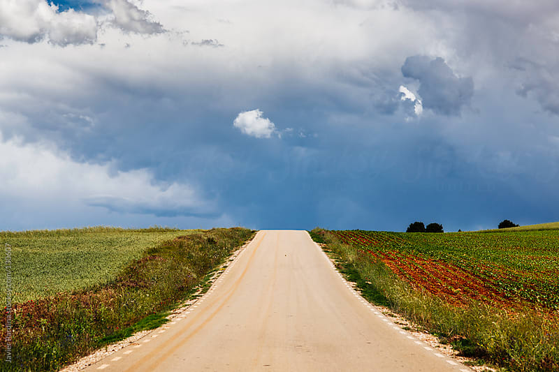 rural road to cloudy sky by Javier Pardina for Stocksy United