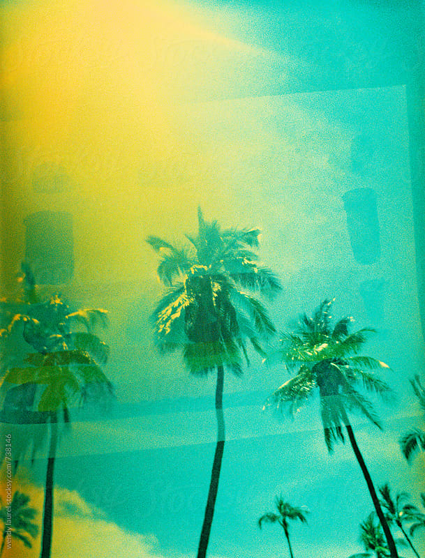 green and yellow sky palm trees on film by wendy laurel for Stocksy United