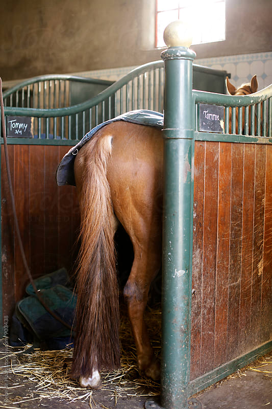 back of horse in stable by Rene de Haan for Stocksy United