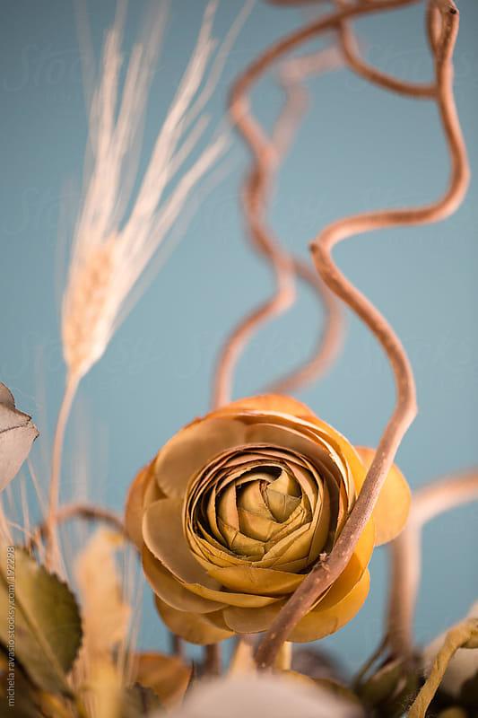 Detail of flower by michela ravasio for Stocksy United