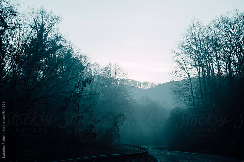 Fog Above the Forest  by Katarina Radovic for Stocksy United