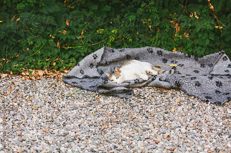 Cat rolls over pet carpet in garden by Laura Stolfi for Stocksy United