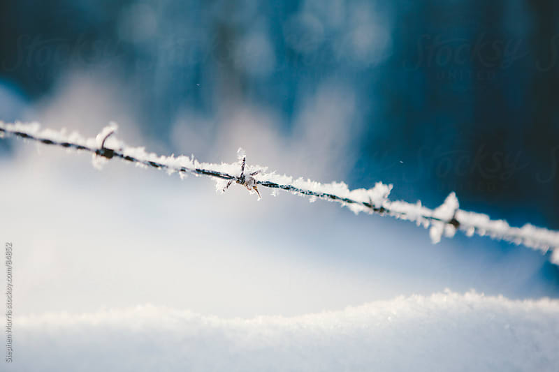 Ice Crystals on Barbed Wire by Stephen Morris for Stocksy United