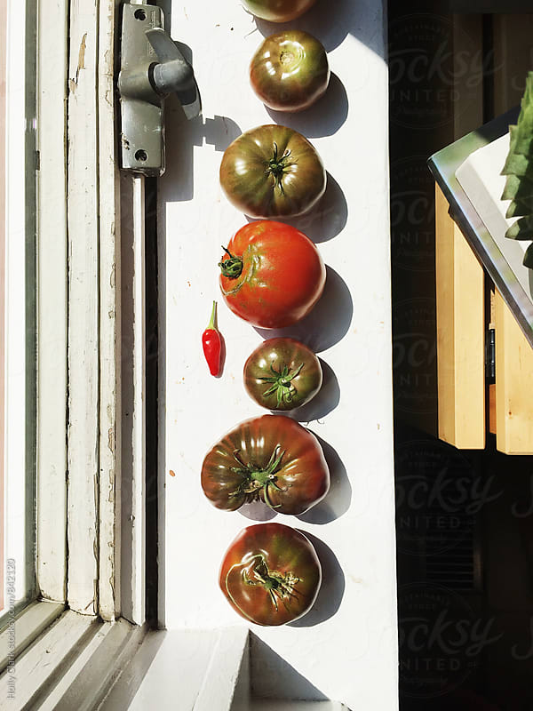 Tomatoes ripening on a windowsill by Holly Clark for Stocksy United