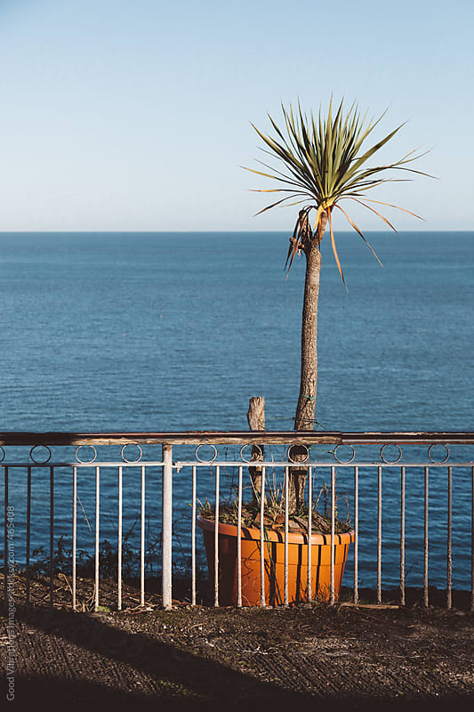 Palm tree in a terrace overlooking the sea by Good Vibrations Images for Stocksy United