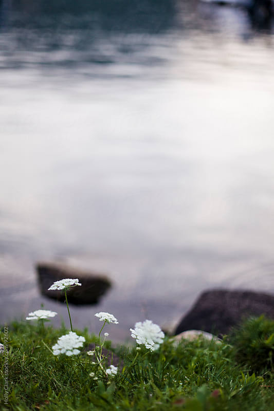 Flowers at the edge of a lake. by Holly Clark for Stocksy United