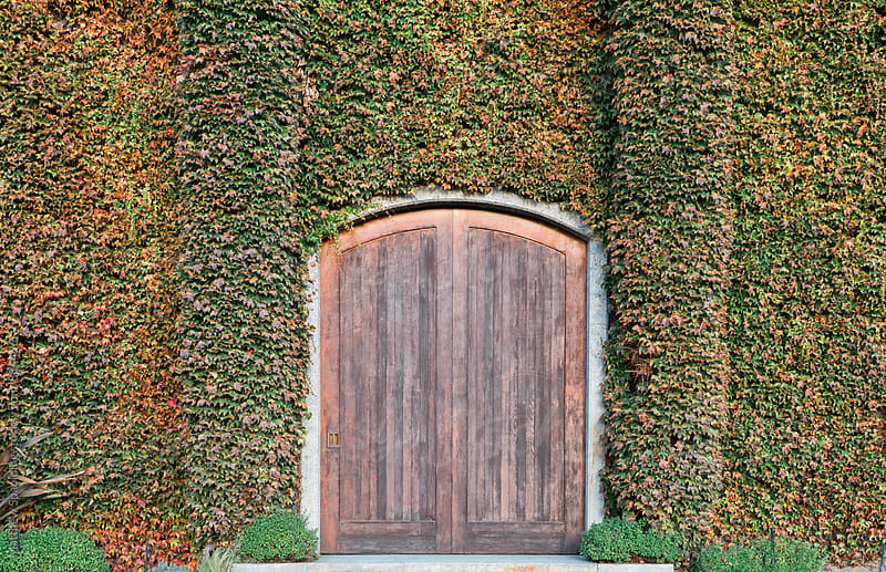 Rustic wood doors and overgrown vines by Matthew Spaulding for Stocksy United