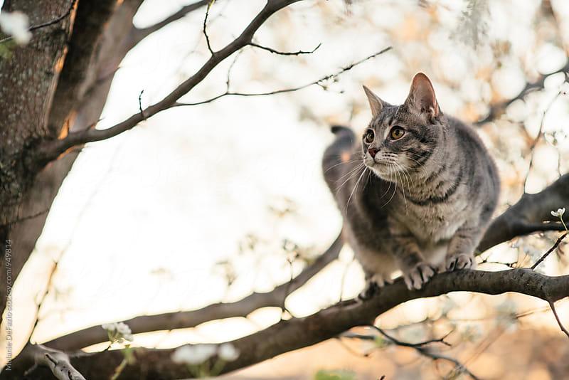 Kitty climbing a tree by Melanie DeFazio for Stocksy United