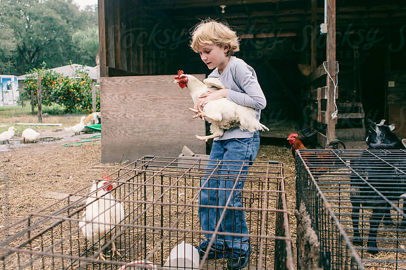 Boy holding chicken in barnyard by Stephen Morris for Stocksy United