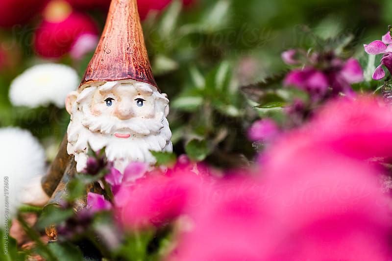 Garden Gnome in Flower Bed by Kirsty Begg for Stocksy United