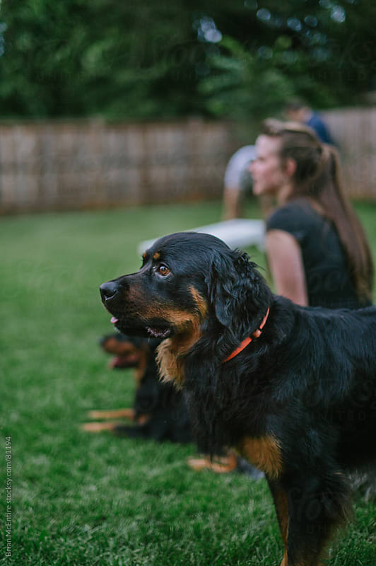 Family Pet Dog Prominently Featured Among Guests Watching Game At Backyard Party by Brian McEntire for Stocksy United
