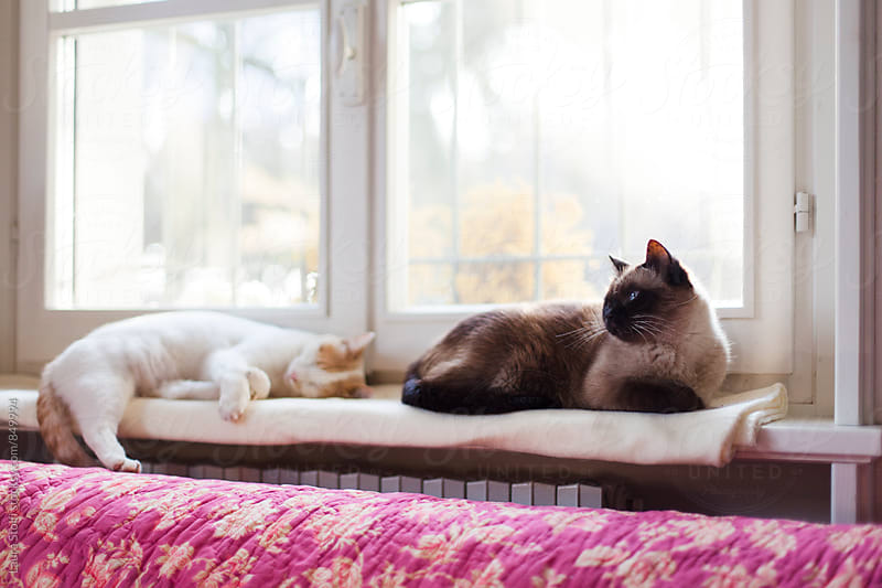 Two cats laying together on windowsill by the radiator by Laura Stolfi for Stocksy United