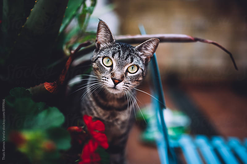 cat portrait with a flower by Thais Ramos Varela for Stocksy United