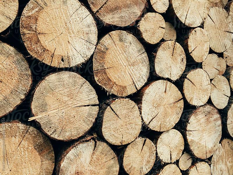 Stack of cut logs by Paul Edmondson for Stocksy United