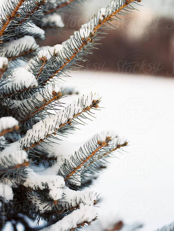 Fresh snow fallen on an evergreen by Meghan Boyer for Stocksy United